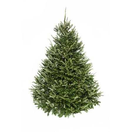 Hallmark Real Fresh Cut Fraser Fir Christmas Tree, 6 Foot, No Stand, Walmart Exclusive