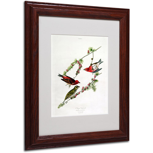 "Trademark Fine Art ""Purple Finch"" Canvas Art by John James Audubon, Wood Frame"