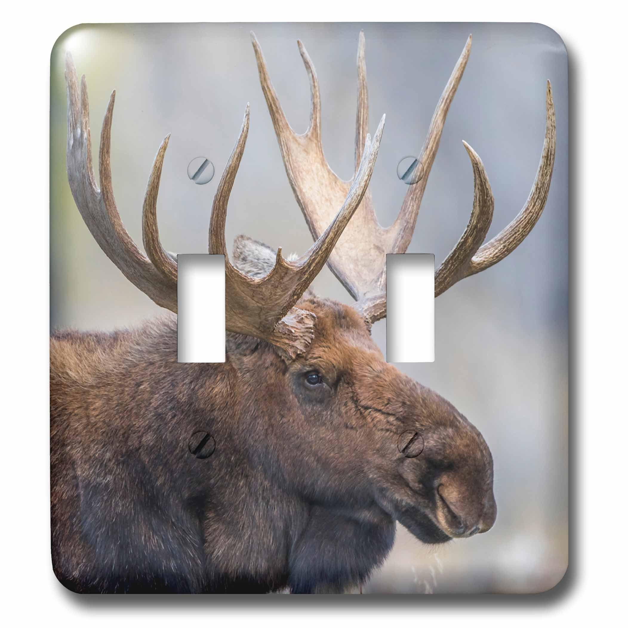 3drose Usa Wyoming Grand Teton Np Bull Moose Poses For A Portrait Double Toggle Switch Lsp 260628 2 Walmart Com Walmart Com