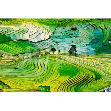 Beautiful Landscape about Terraced Rice Field in Laocai Province, Vietnam Print Wall Art By Jimmy