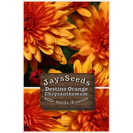 - Destino Orange Mum - Chrysanthemum Seeds 1/2 Ounce