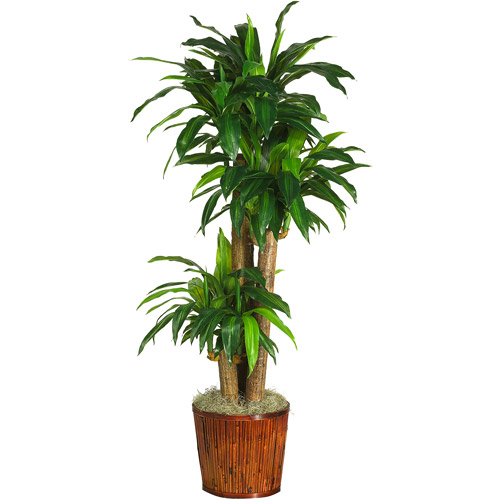 "Real Touch 62"" Dracena with Basket Silk Plant"