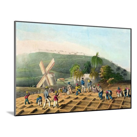 Planting the Sugar-Cane, Pub. by Infant School Society Depository, London, C.1820 Wood Mounted Print Wall Art