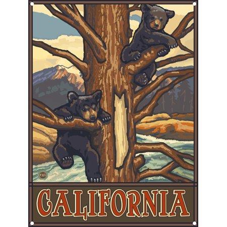 California Wildlife Two Bear Cubs Metal Art Print by Paul A. Lanquist (9