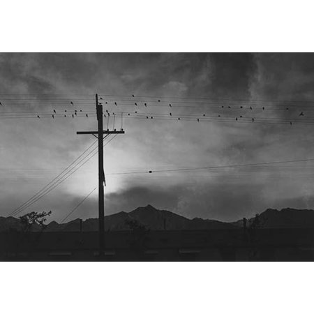 Birds sit on power lines above buildings mountains and setting sun in the background  Ansel Easton Adams was an American photographer best known for his black-and-white photographs of the American