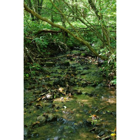 LAMINATED POSTER Brook Green Babble Water Flow The Flow Of The River Poster Print 24 x -