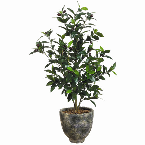 Tori Home Olive Tree in Pot