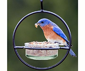 Holds 4 Oz of Jelly or Mealworms Replacement Jar for Oriole or Bluebird Feeders