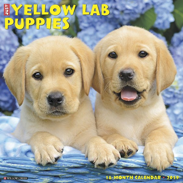 Just Yellow Lab Puppies 2019 Calendar
