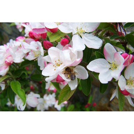 LAMINATED POSTER Bee Pollination Bloom Spring Poster Print 24 x 36