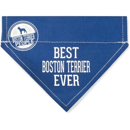 Pavilion - Best Boston Terrier Ever - Blue Canvas Small Dog Bandana Collar - 7