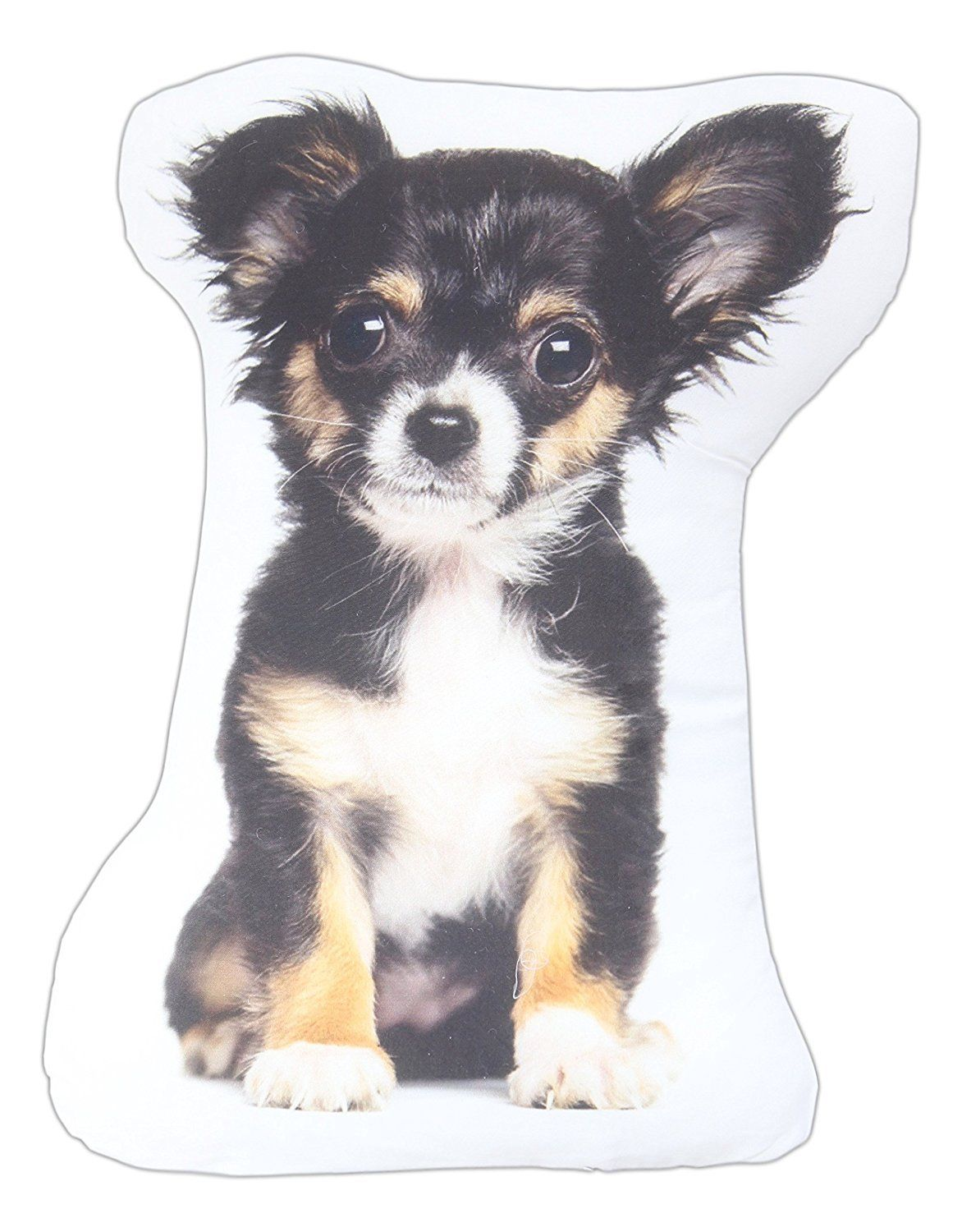 Long Haired Chihuahua Black White Brown
