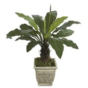 Autograph Foliages PF-70010 - 51 Inch Anthurium Plant - Two-Tone Green