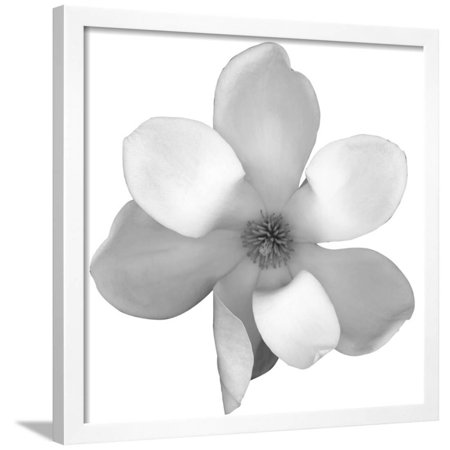 Black And White Magnolia Flower Framed Print Wall Art By Anna Miller