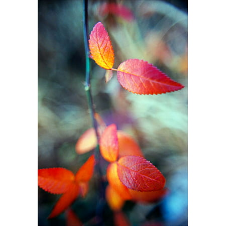 Fall Leaves I, Fine Art Photograph By: Bob Stefko; One 24x36in Fine Art Paper Giclee -
