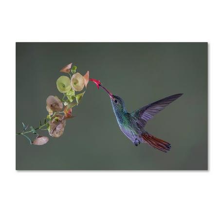 trademark fine art stretch canvas art by greg barsh walmart com