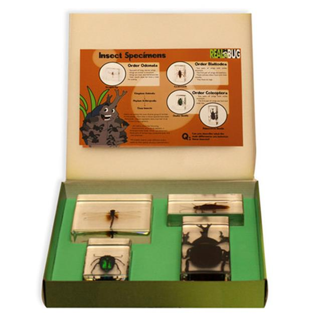 ED SPELDY EAST BFK1201 Biology for Kids  Insect Specimen Set  4pc with instruction