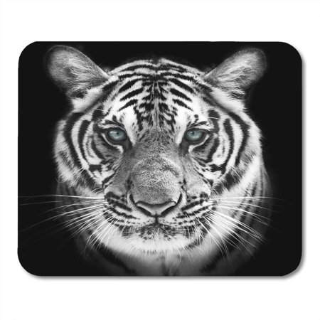 KDAGR Face of White Bengal Tiger Mask The Biggest Cat Wild Beauty Most Dangerous and Mighty Beast Mousepad Mouse Pad Mouse Mat 9x10 inch](Beauty And Beast Mask)