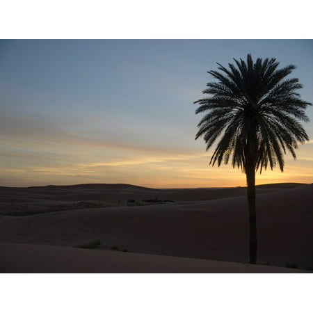 Peel-n-Stick Poster of Palm Sand Dune Desert Morocco Atmospheric DuskPoster 24x16 Adhesive Sticker Poster Print (City Of Palm Desert)