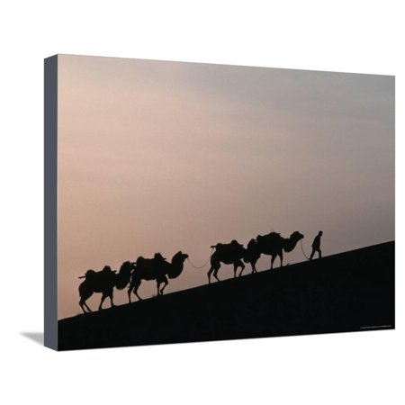 Camel Caravan Silhouetted at Dawn on the Silk Road, Dunhuang, China Stretched Canvas Print Wall Art By Keren Su
