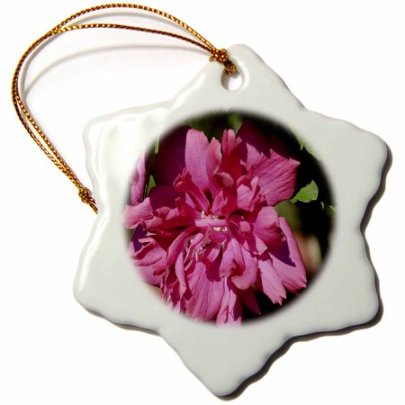 3dRose Rose of Sharon A pink flower - Snowflake Ornament,