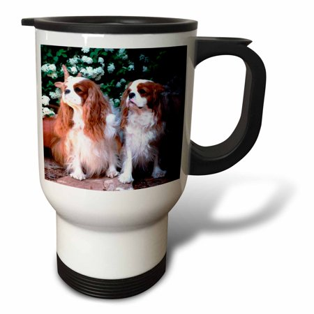 3dRose Two Blenheim Cavalier King Spaniel, Travel Mug, 14oz,