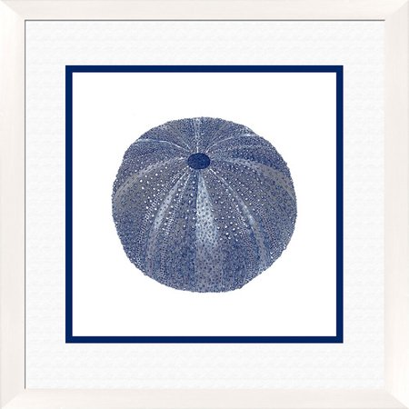 PTM Images Sea Urchin Shell Gicl e I Framed Graphic Art