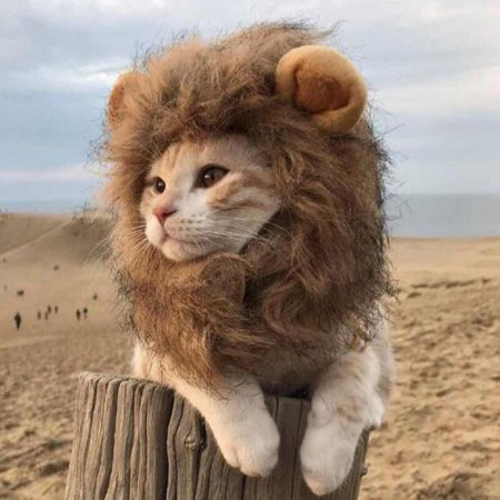 Kitty Cat Halloween Ideas (Lion Mane Wig Pet Hair Headgear For Small Dog And Cats Funny Cat Kitty Little Puppy Costume - Adorable Pet Hat for Christmas &)