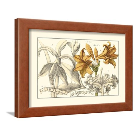 Embellished Arena Botanical II Framed Print Wall Art By Arena