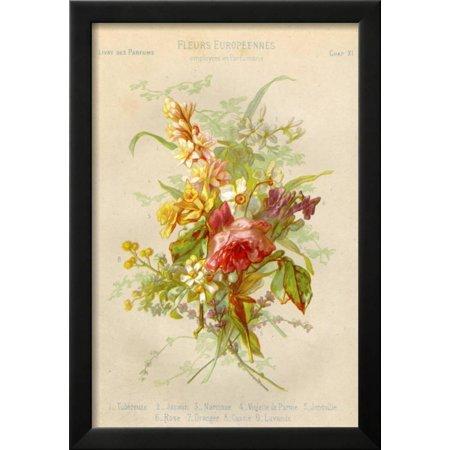 European Flowers Used in Making Perfumes Framed Print Wall Art ...