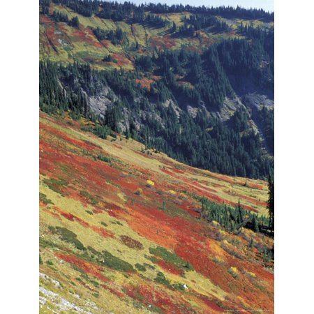 Autumn Color on Mountain Slope, Mt. Rainier National Park, Washington, USA Print Wall Art By William