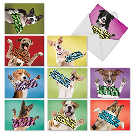 'M2369TYB DOG BIG THANKS' 10 Assorted Thank You Note Cards Featuring Adorable and Loving Dogs Offering to Give You a Hug with Envelopes by The Best Card Company Boxer Dog Note Card