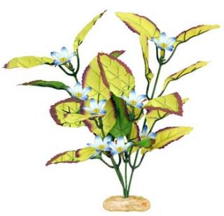 Blue Ribbon Plant - Flowering Willow Leaf Small Plum/Yel