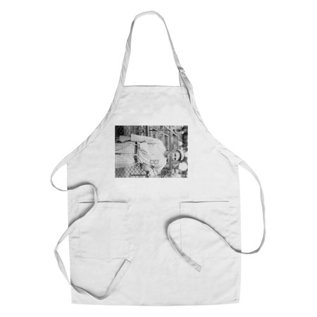 Brooklyn Dodgers Photo - Ivan Olson, Brooklyn Robins (Dodgers), Baseball Photo (Cotton/Polyester Chef's Apron)