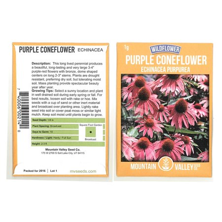 Purple Coneflower Wild Flower Seeds - 1 Gram Packet - Wildflower Garden Seeds - Echinacea purpurea