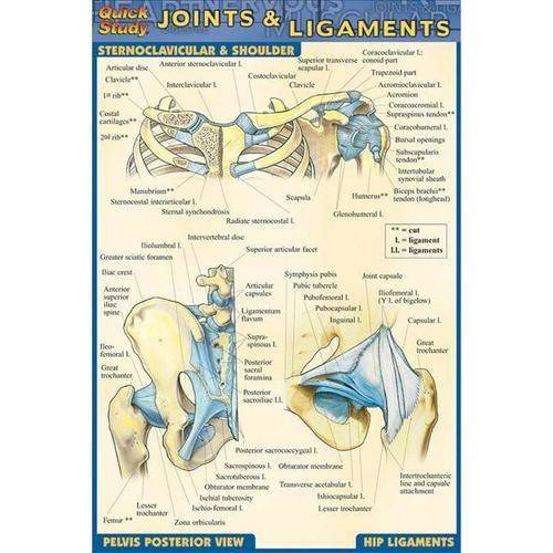 Joints & Ligaments Quick Reference Guide