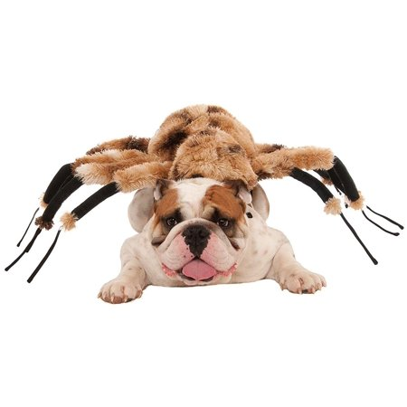 Giant Spider Dog Costume: Small - Black Dog Costumes