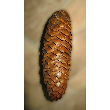 LAMINATED POSTER Pine Cones Grove Decoration Tree Forest Tree Fruit Poster Print 24 x 36