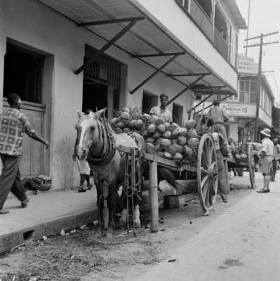 Trinidad and Tobago Trinidad Coconuts on horsedrawn carts Poster Print