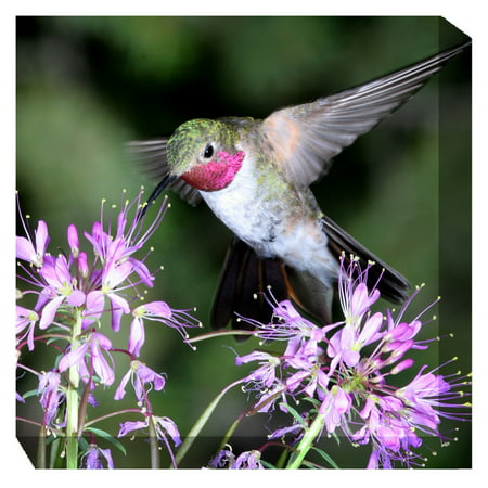 West of the Wind Hummingbird #1 Outdoor Canvas -