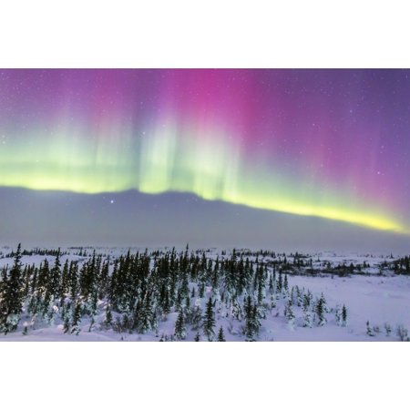 February 20 2015 - Aurora borealis from Churchill Manitoba Canada This is looking north toward a curtain with pink upper coloration from low-energy electrons exciting oxygen in the high atmosphere Pos