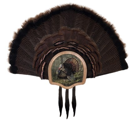 Spring Opening Kit - Walnut Hollow Country Three Beard Turkey Display Kit with King of Spring Image