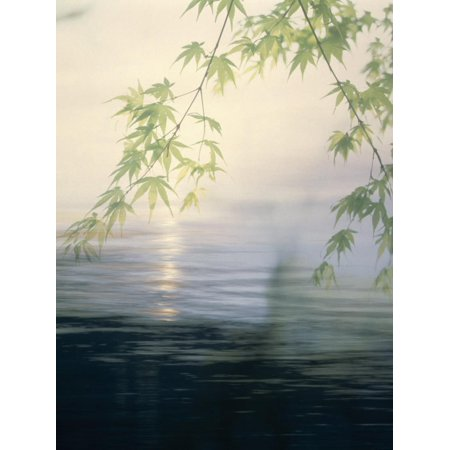 Fog Hovering Above Water with Green Leafy Branches Print Wall Art