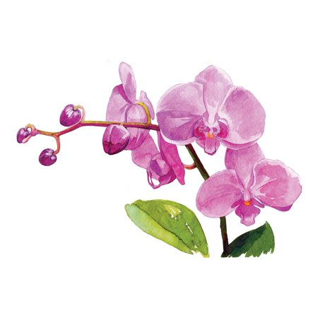 Watercolor Orchids Floral Artwork Wall Decor Square Signs Size (), 12x12