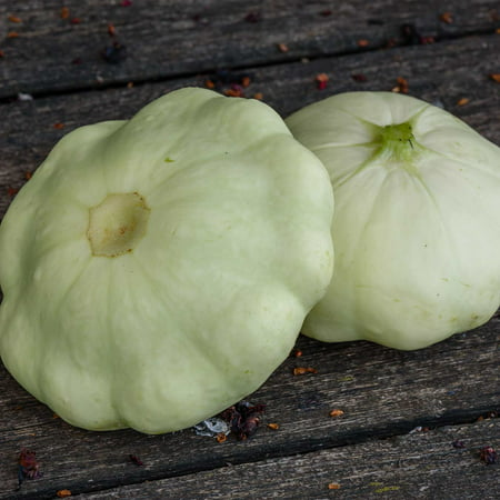 Early White Scallop Summer Squash Garden Seeds - 4 Oz - Heirloom, Non-GMO - Vegetable Gardening Seed - Mountain Valley Seeds