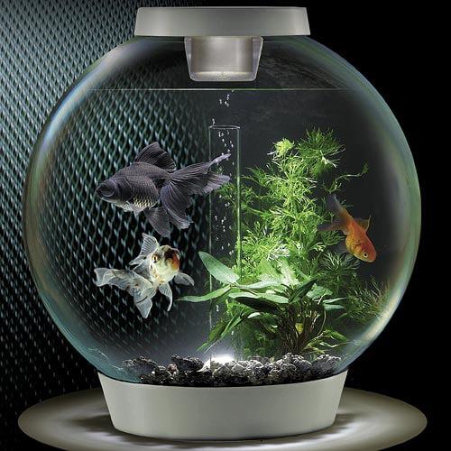 BiOrb 8 Gallon Aquarium