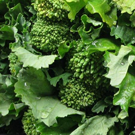 Broccoli Raab Heirloom Great Vegetable Seeds By Seed Kingdom 1,000 Seeds