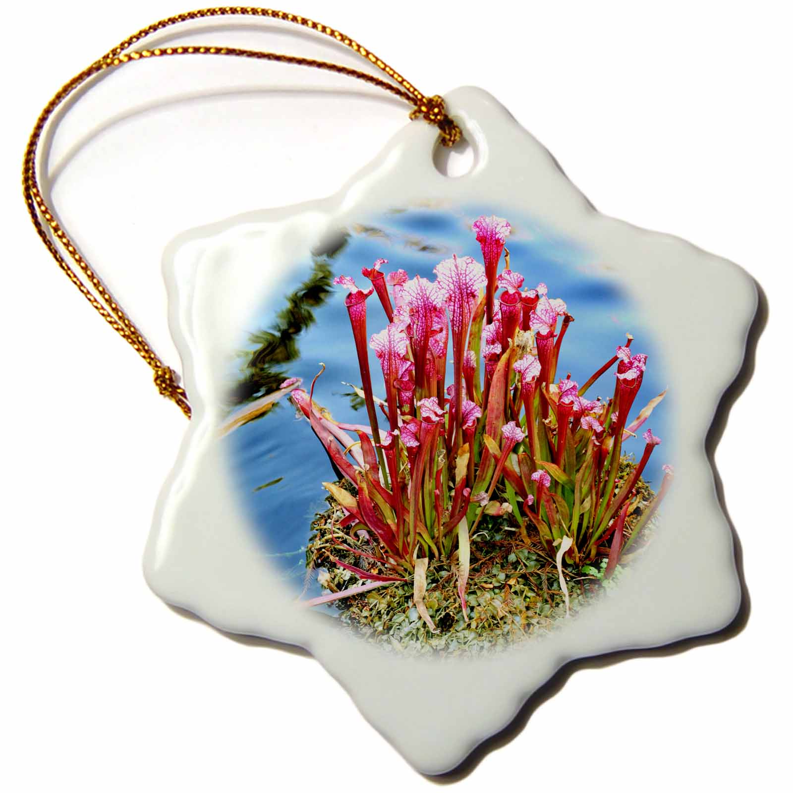 3dRose This is a carnivorous plant that lives in the water, Snowflake Ornament, Porcelain, 3-inch