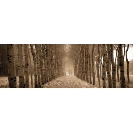 Posterazzi The Shimmering Forest Canvas Art - Heather Ross (12 x 36)