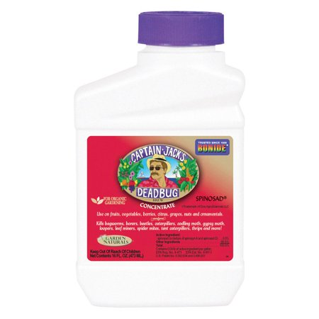 Bonide Captain Jack's Deadbug Brew Insect Killer